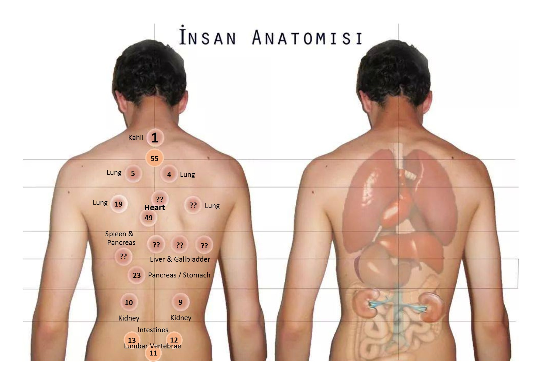 Hijama Points - Back