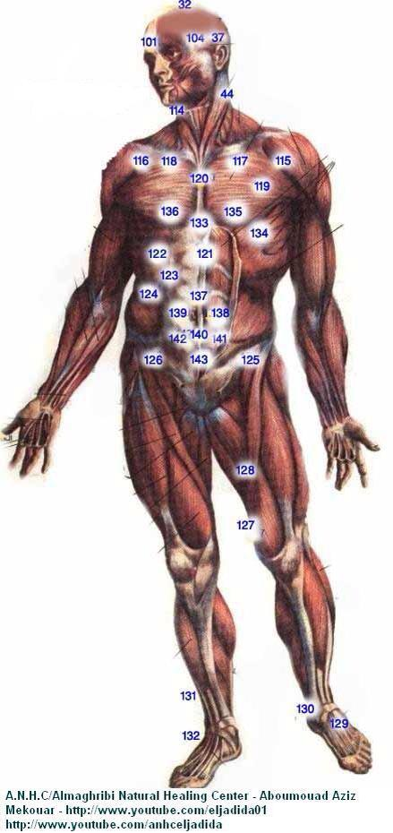 front - hijama points