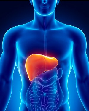 Hijama effects on the Liver